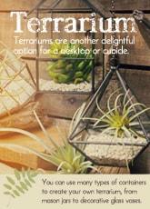 テラリウム|インテリア 雑貨